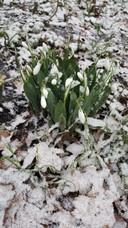 Foto is genomen in het Groenhovenpark in Gouda, tijdens een winterwandeling in de sneeuw vandaag.