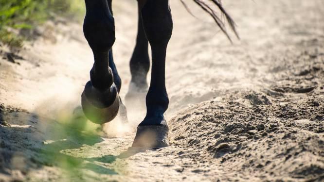 Paard slaat op hol en duikt met koets de gracht in: geen gewonden