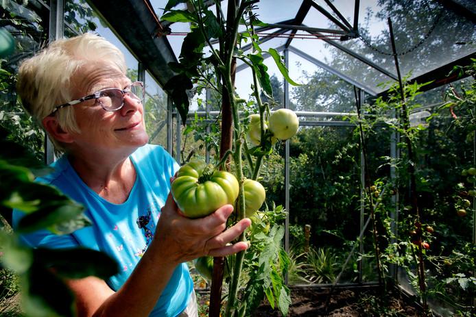 Nog even wachten, maar dan kan Jacqueline Steeghs soep maken van haar zelfgekweekte ananastomaten.
