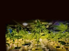 Politie vindt 178 hennepplanten in zijn woning, maar Utrechter (40) ontkent: 'Ik heb geen groene vingers'