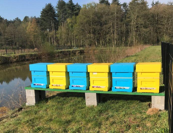 De blauwe en gele bijenkasten bieden plaats aan 300.000 bijen.
