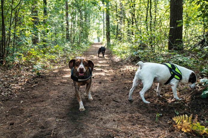 In Kampenhout kunnen honden voorlopig nog niet vrij los lopen in het bos.