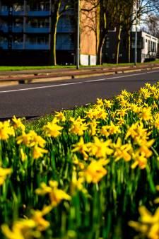 Het is hartje winter en de narcissen bloeien nu al in volle glorie