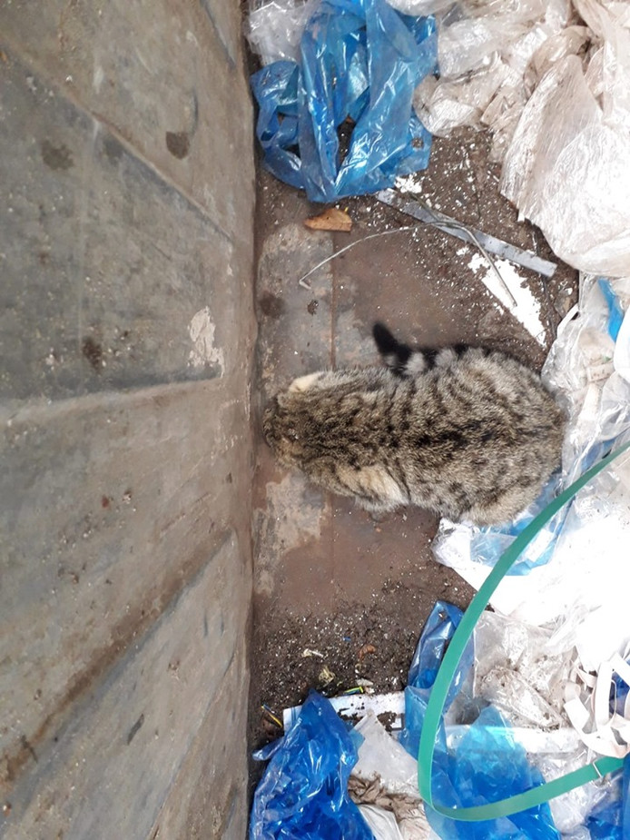 De kat kwam met haar hoofd vast te zitten in de afwateringsopening van de afvalcontainer.