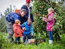 Met hop-on hop-off bus door Hoeksche Waard: stedelingen nemen kijkje op de boerderij