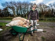 Douwe schaamt zich kapot na schapenslachtpartij: 'Als honden eenmaal bloed hebben geproefd, willen ze meer'