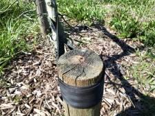 Waarom zou iemand aluminium plaatjes stelen uit het Levensbomenbos?