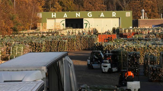 Ruim 100.000 kerstbomen liggen voor de hangar op vliegveld Twente