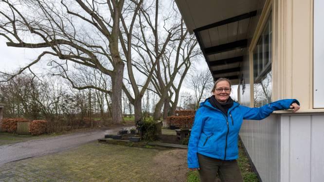 Buurt niet blij met aangekondigde kap van 'karakteristieke'bomen langs Oirschots laantje
