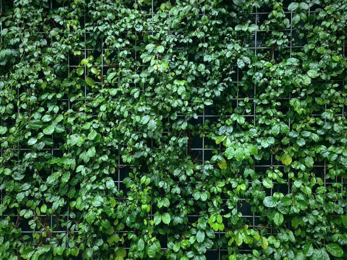 Tuindraad (met klimplanten)