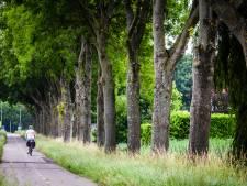 Petitie tegen kap N489 redt minimaal één boom