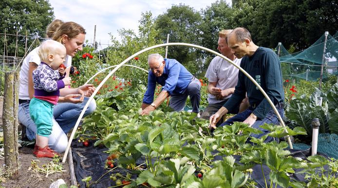 Volkstuinders uit Papendrecht en Sliedrecht kunnen beter geen slootwater meer gebruiken om hun groenten te besproeien. (Foto ter illustratie)