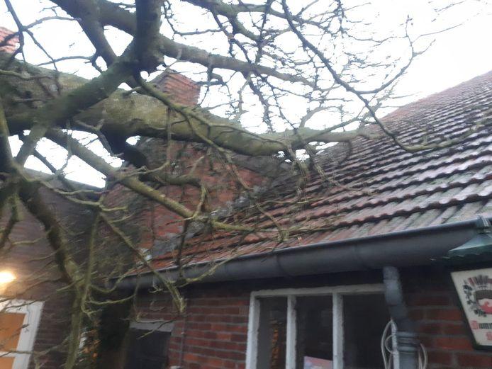 De tak van de kastanje ligt op het dak