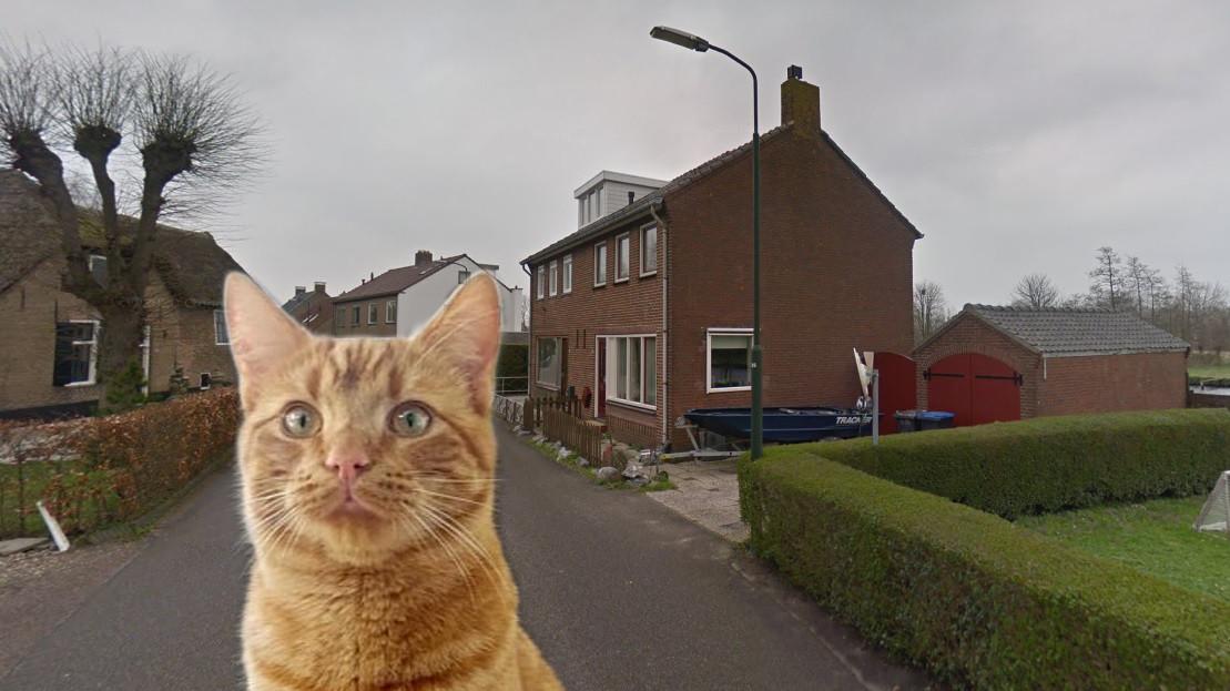 Kat Max raakte ernstig gewond nadat hij werd beschoten op de Binnendams in Hardinxveld-Giessendam.