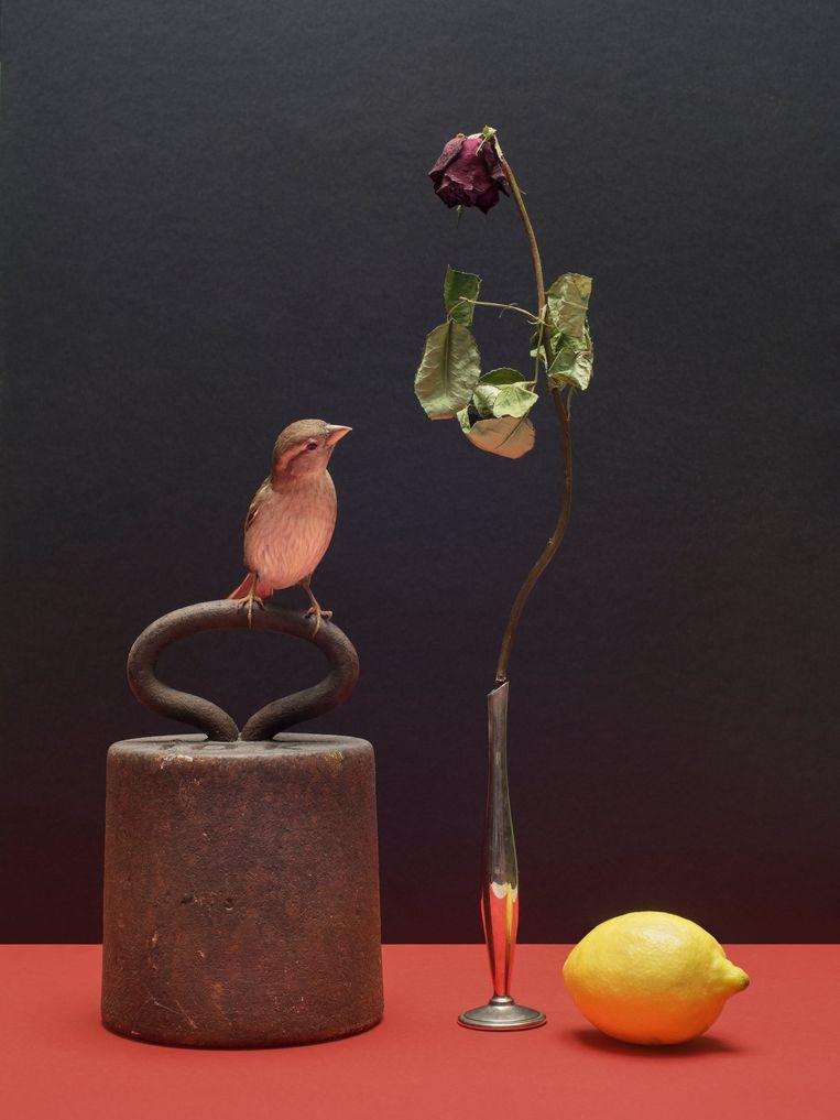 'Het volle gewicht der relativerende bekrachtiging' Beeld Hans van Asch