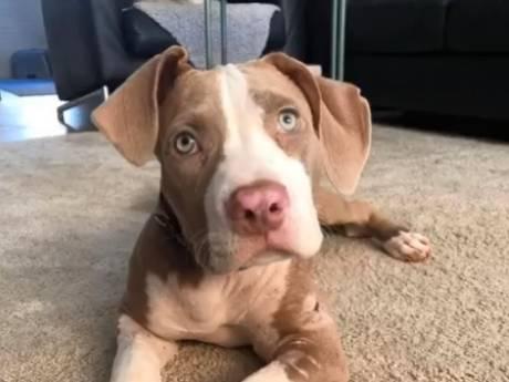 Dierenopvang heeft geld nodig voor amputatie hondenpootje