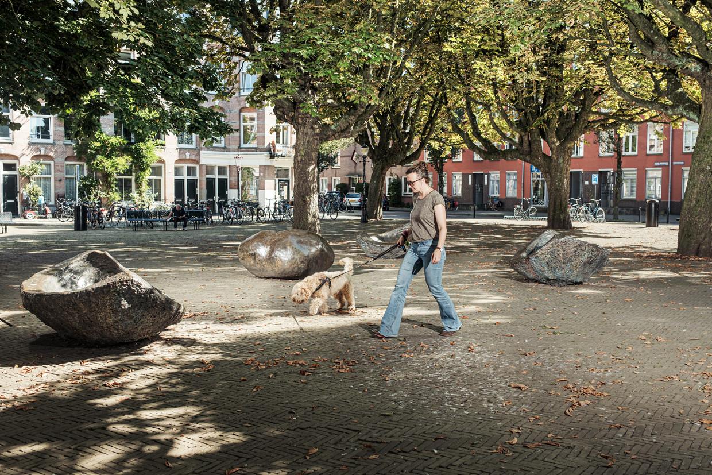 Kastanjebomen op het Kastanjeplein in Oost. Zieke kastanjebomen kunnen worden vervangen door de Amerikaanse kastanje.