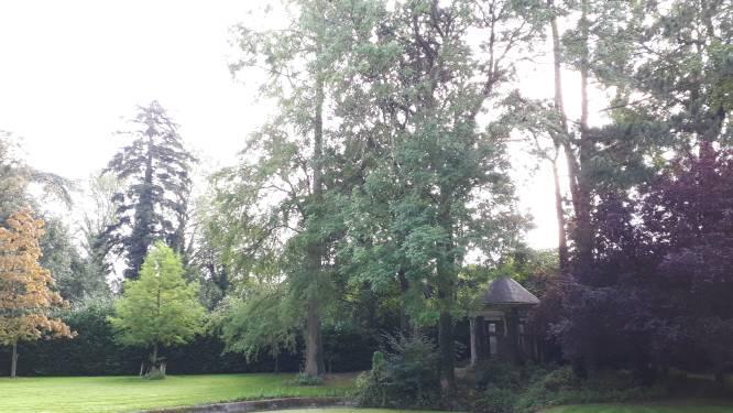 """Vrees voor onherstelbare natuurschade bij bouwproject op site Cantaert: """"Eeuwenoude bomen dreigen te sneuvelen"""""""