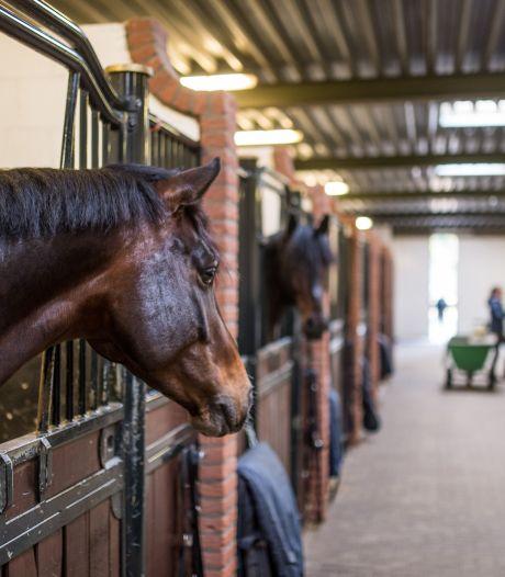 Waakzaamheid in paardenwereld om besmettelijk virus: 'Het kan zomaar een hele bedrijfstak de grond in helpen'