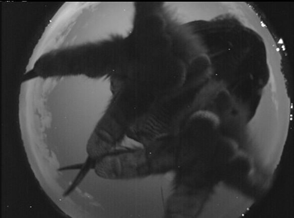 Regelmatig pauzeren er dieren op de camera's van NASA. Zo kregen ze in het verleden al eens bezoek van een uil en tal van insecten.