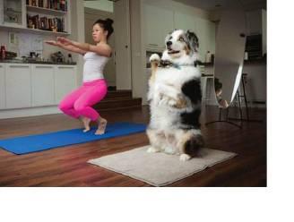 Wedden dat deze dieren beter zijn in yoga dan jij?