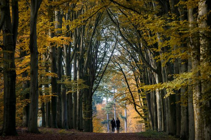 Herfst op landgoed Prattenburg