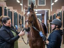 Sensor laat paard beter presteren: 'Er kan méér met die teugels'