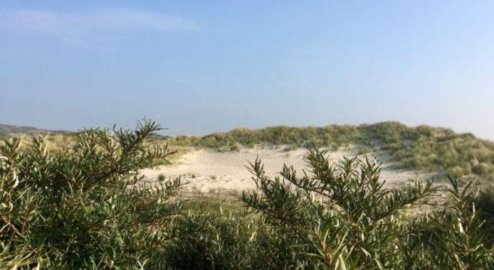 Eén van de weinige delen met kaal zand in de Meeuwenduinen