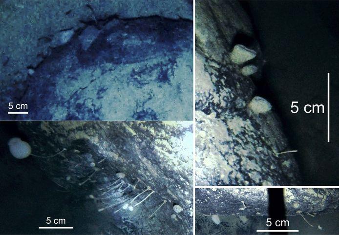Linksonder zie je gestalkte dieren. Rechtsboven zijn sponzen.