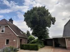 Betreurde 100-jarige monumentale Geffense reus gaat tegen de vlakte: 'Boom hoort echt bij het dorp'