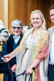Bruid Ashley is gek op alpaca's (en bruidegom Bart), dus wachtte haar bij het stadhuis een verrassing
