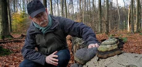 Boswachter Natuurmonumenten: Tonderzwam, er kan er maar één de echte zijn