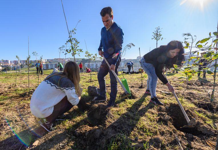 Bosaanplant staat hoog in de lijst van groene voornemens van bedrijven, maar het doet een groot beroep op het landoppervlak. Beeld Corbis via Getty Images
