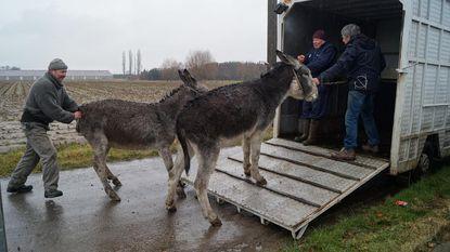Eind goed, al goed voor Ruiseleedse ezels