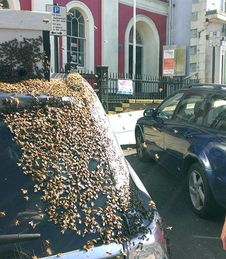 Auto van Britse vrouw twee dagen belaagd door bijen