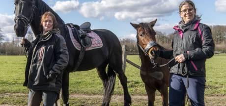 Heibel bij Ponystal Hengelo: 'Dit komt niet meer goed'