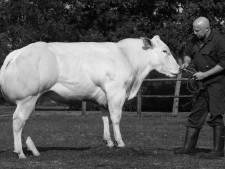 KI-baas Ben Meijerink uit Albergen vangt drie miljoen rietjes stierensperma op