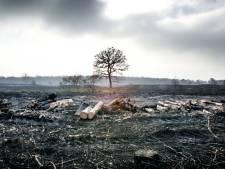 Deurnsche Peel gaat in vlammen op: deze Brabantse natuurgebieden vielen ook ten prooi aan enorme branden