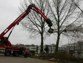 Gevaarlijke Tilburgse bomen met spoed gerooid