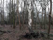 'Gevaarlijk in het bos? Hier toch zeker niet!'