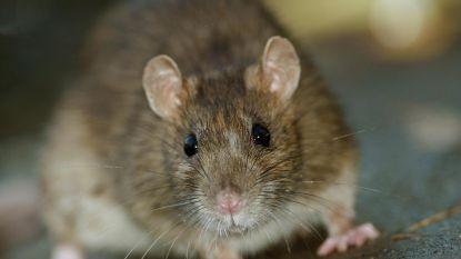 """Die 540 kilo vermiste wiet? """"Opgegeten door de muizen"""", beweren Argentijnse agenten"""