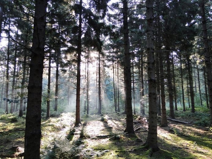 Het Urkerbos bij Urk.