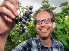Wijn uit Moerwijk is succes: 'Uitzonderlijk mooi Haags wijnjaar'