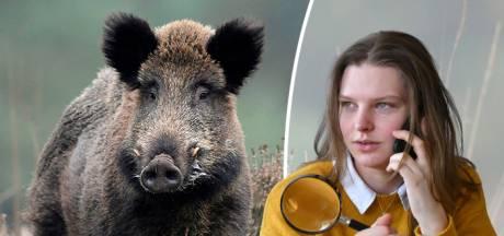 Is een aanval van een wild zwijn uniek?