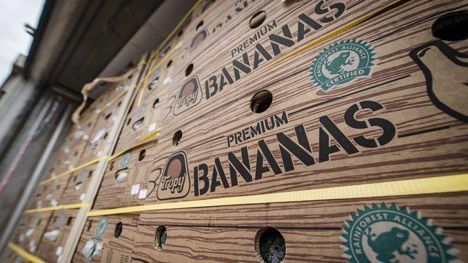 200 miljoen aan coke tussen bananen in haven van Antwerpen