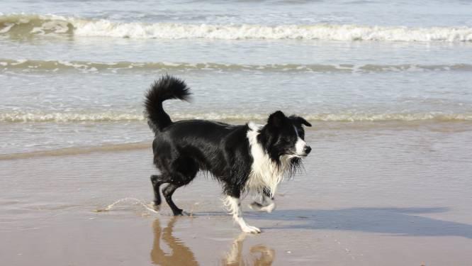 Honden opnieuw toegelaten op het strand
