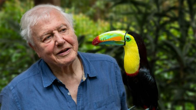 Attenborough en toekan in 'Life in Color'. Beeld Netflix and British Broadcasting Corporation