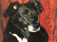 Stamgasten proosten op hondstrouwe Flipse
