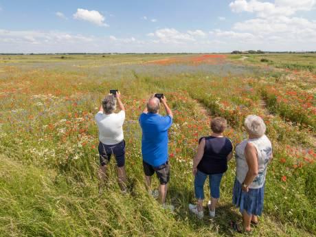 Het Zeeuwse Landschap: vertrap de bloemenpracht in Yerseke Moer niet
