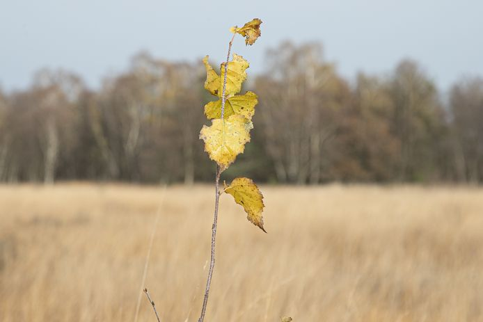 Het Wierdense Veld in Overijssel ligt onder vuur. CDA en VVD willen van het Natura-2000 gebied af. Het PBL adviseert juist om natuurgebieden uit te breiden.